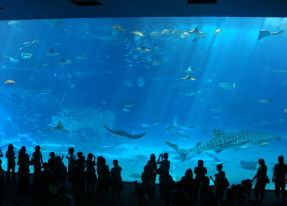 沖縄美ら海水族館30