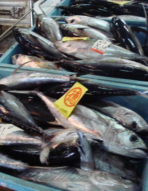 魚市場@鹿児島34