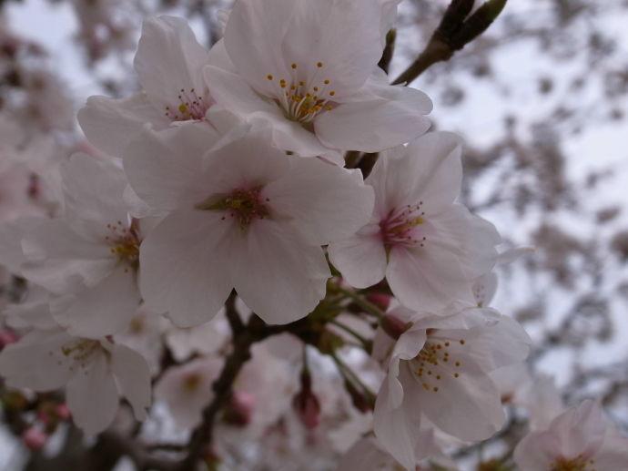 さが桜マラソン10