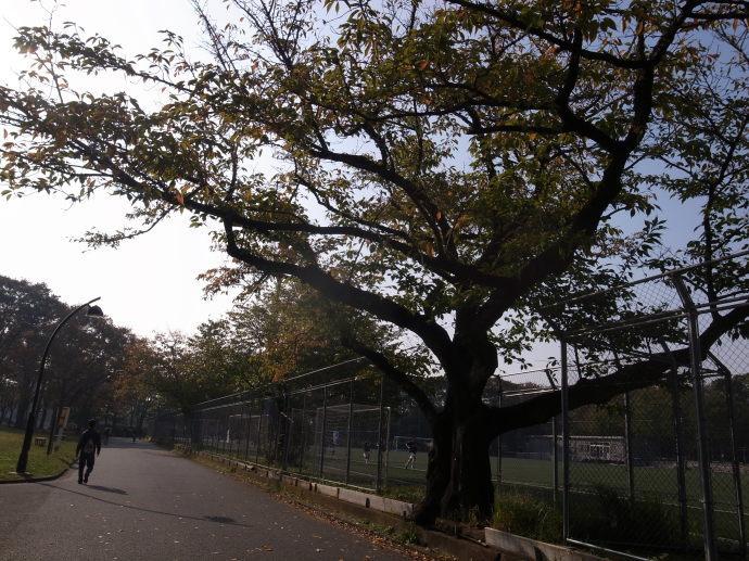 駒沢公園16