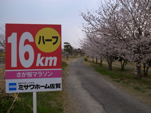 さが桜マラソン11