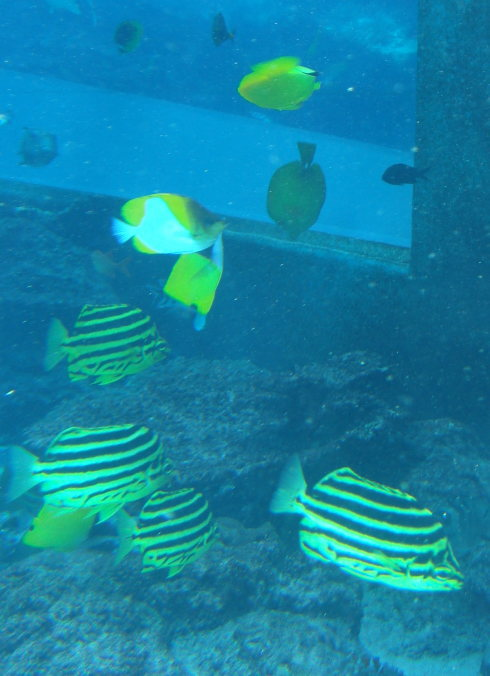 沖縄美ら海水族館61
