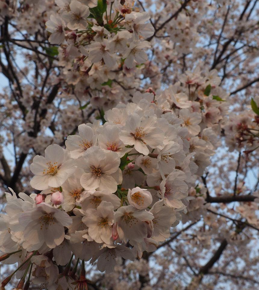 2019_04_07_kasa41