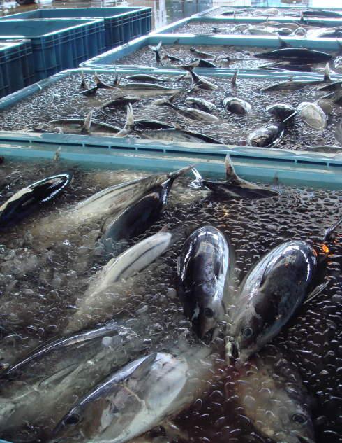 魚市場@鹿児島15