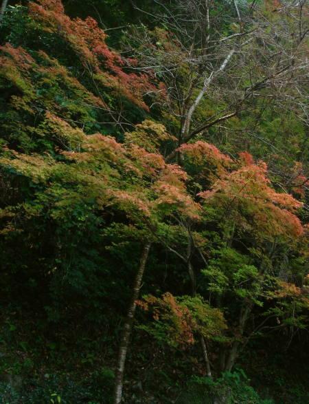 滝と紅葉20