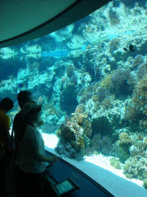 沖縄美ら海水族館12
