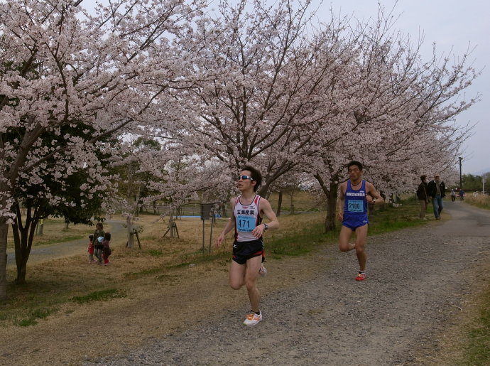 さが桜マラソン56