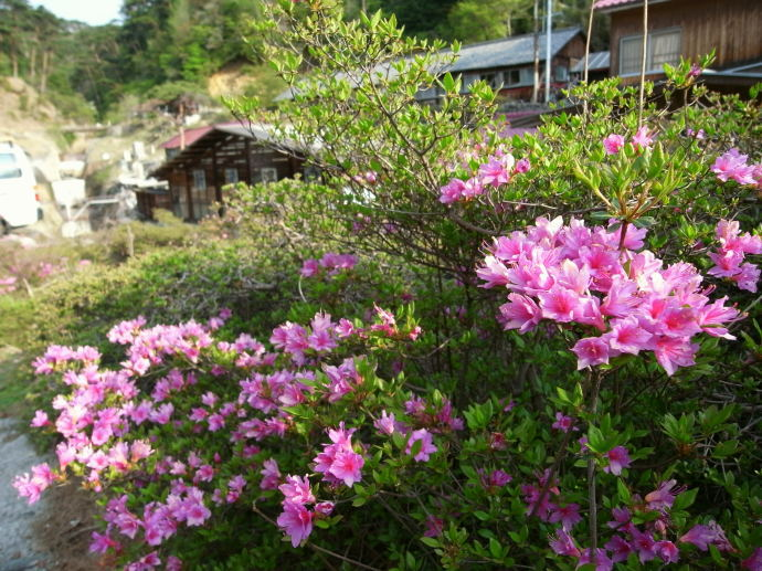 新湯温泉(新燃荘)45