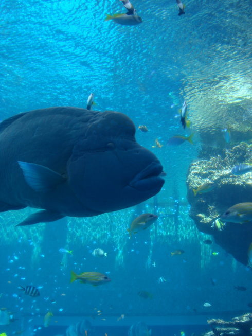 沖縄美ら海水族館21