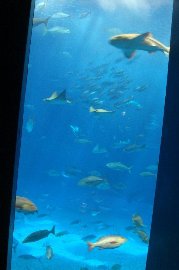 沖縄美ら海水族館63