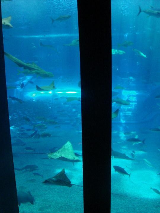 沖縄美ら海水族館24