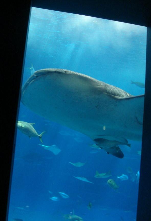 沖縄美ら海水族館26b