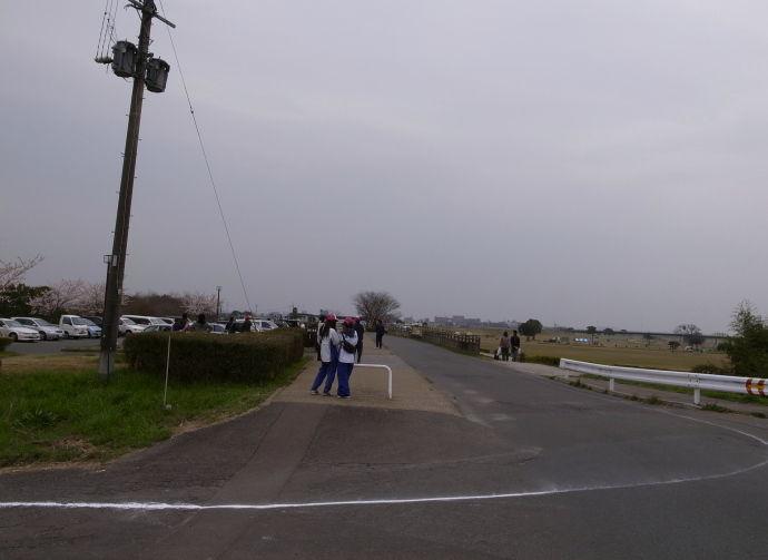 さが桜マラソン50