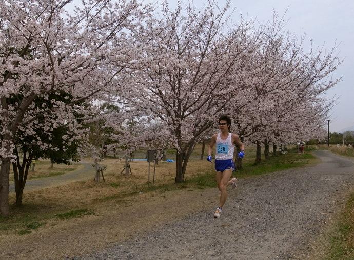 さが桜マラソン55