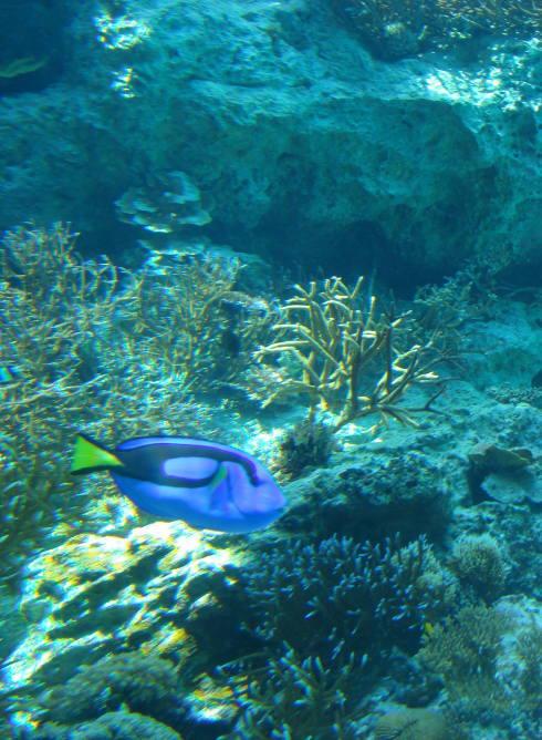 沖縄美ら海水族館60