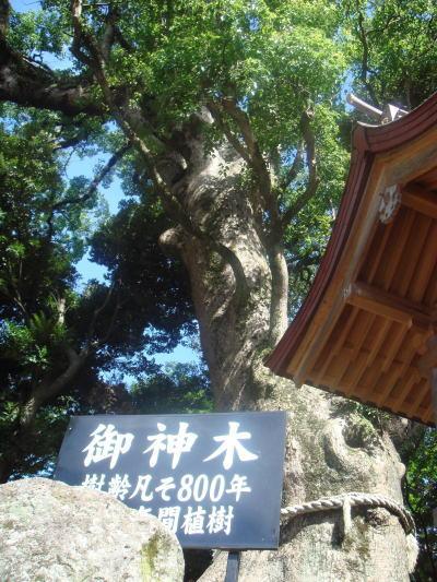 鹿児島神宮40