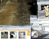 20080510 自動改札機で眠るネコ 電脳コイル暗号