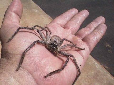 Spider_Dads_hand