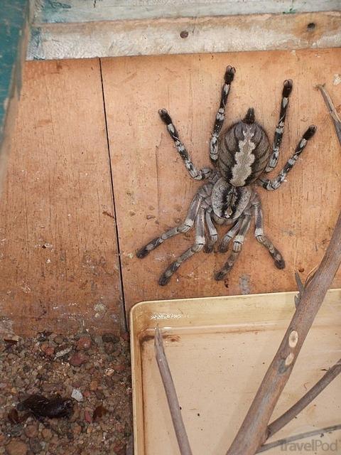 horrible-spider-matara