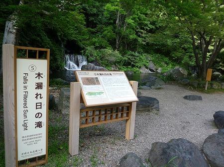 木漏れ日の滝