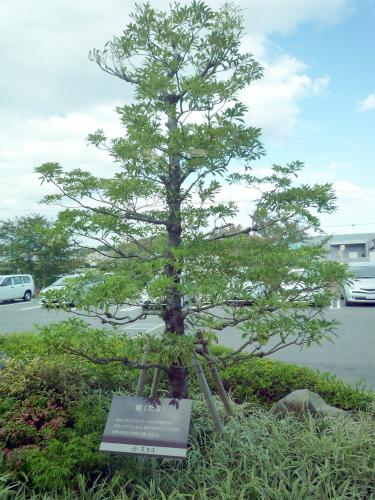 1023-薫寿堂椨の木02