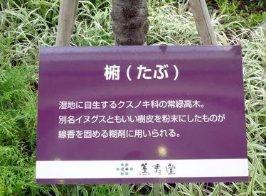 1023-薫寿堂椨の木