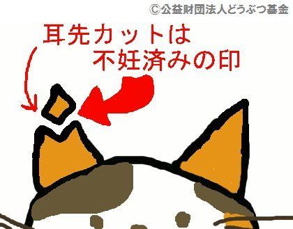 sakuraneko