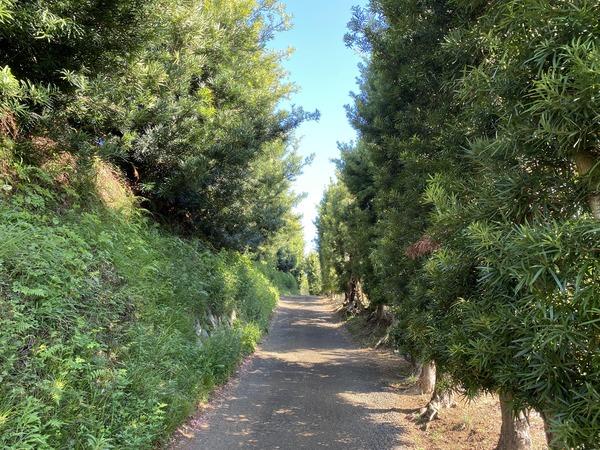 green_street-min