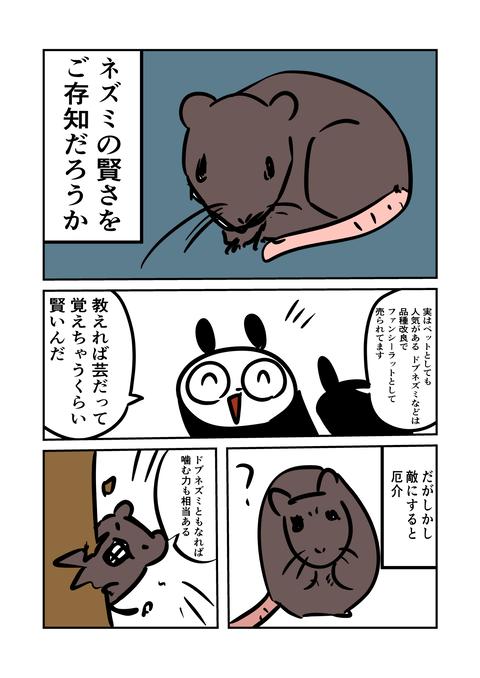 ねずみ_001
