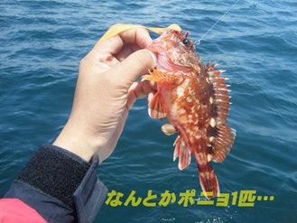 鯛カブラ大会3
