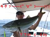 77cm6.4kg