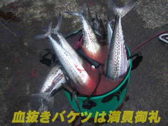 09敦賀5