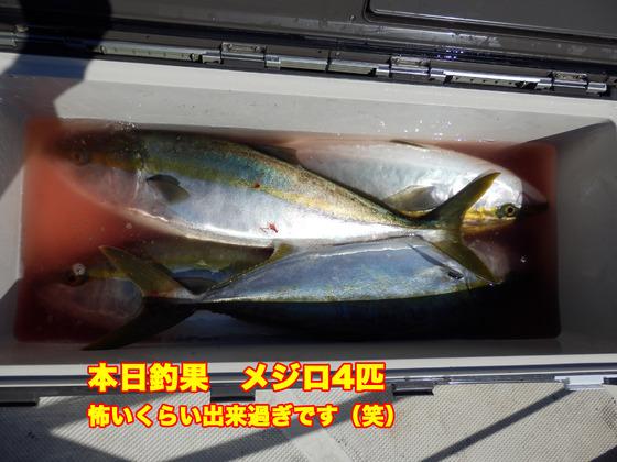 4本日釣果