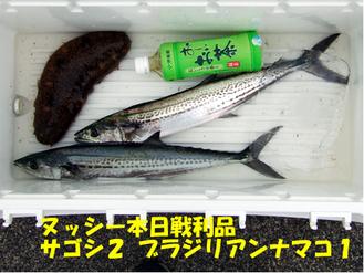 敦賀サゴシ戦利品