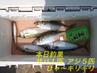 釣果サバ1アジ5
