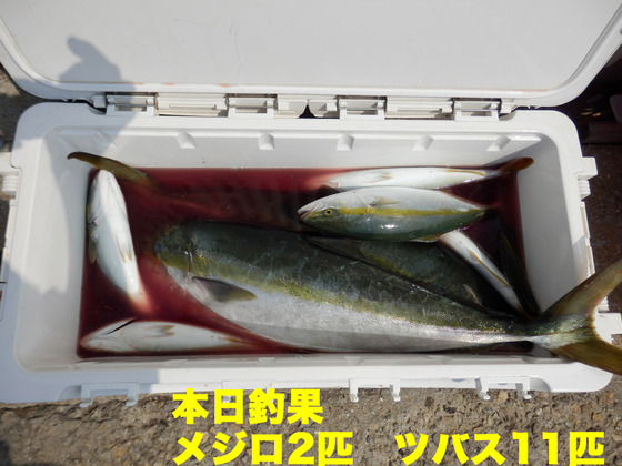6本日釣果