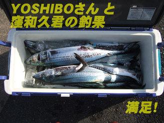 YOSHIBOさん釣果