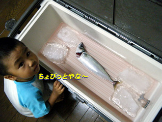 釣果サバ1匹