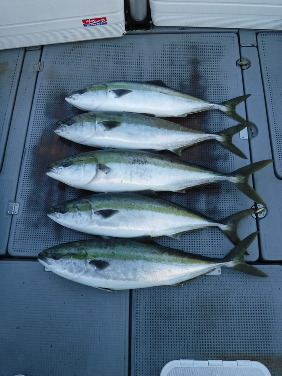 17ブリ釣果