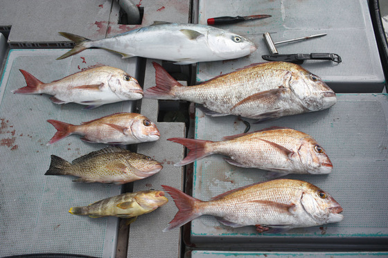 8本日釣果