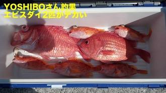 8YOSHIBOさん釣果