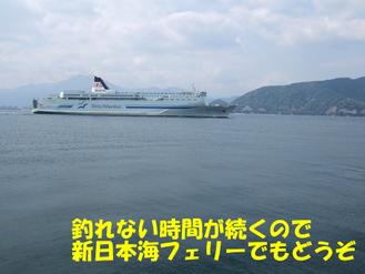 08.04.25敦賀サゴシガッツ隊4