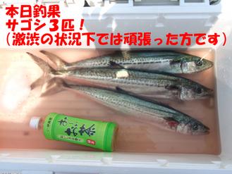 08.04.25敦賀サゴシガッツ隊6
