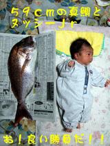 59cmの真鯛とJr