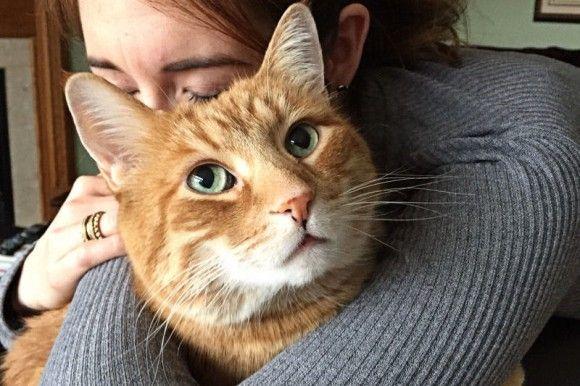 How Long Do Moggie Cats Live