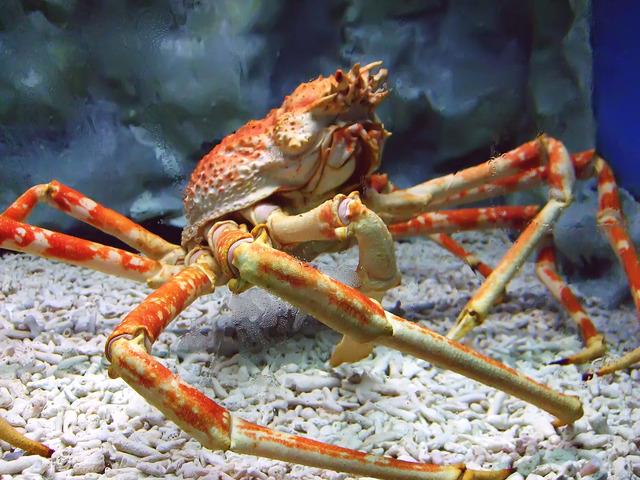 1200px-Spider_crab_at_manila_ocean_park