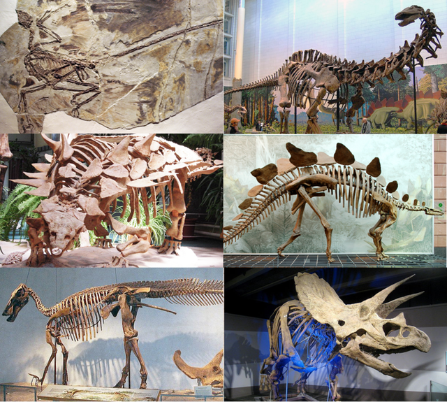 800px-Various_dinosaurs2