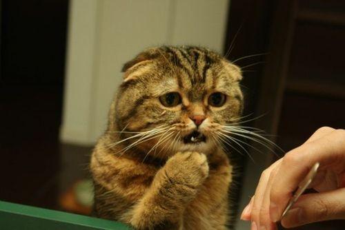 これより面白い猫画像ってあるの?【おもしろ ...