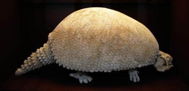 Glyptodon-1