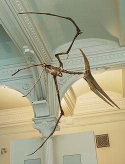 250px-Pteranodon_amnh_martyniuk